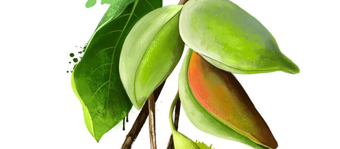 Kakadu Plum a key ingredient in ochre sun sunscreen